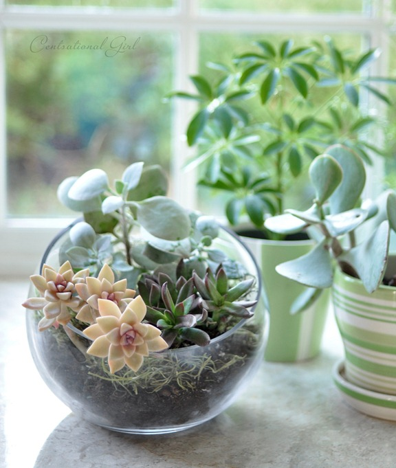 terrariums-decoratifs-10