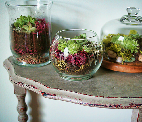 terrariums-decoratifs-11