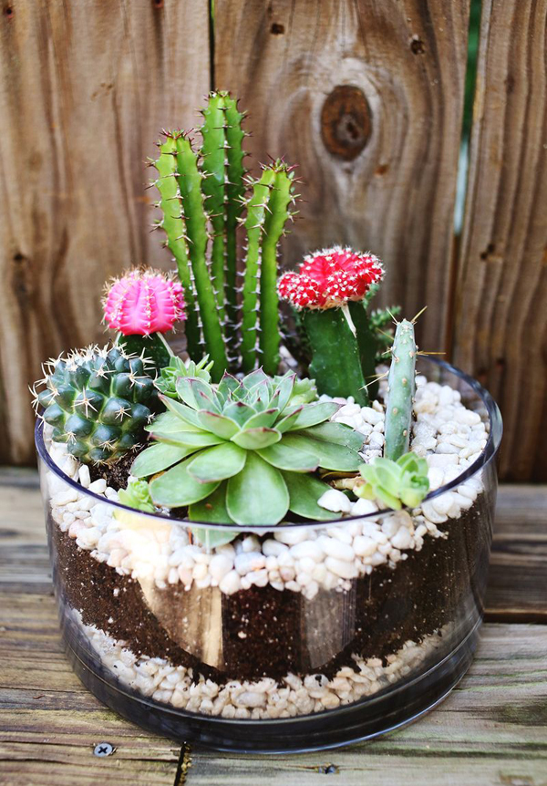 terrariums-decoratifs-15