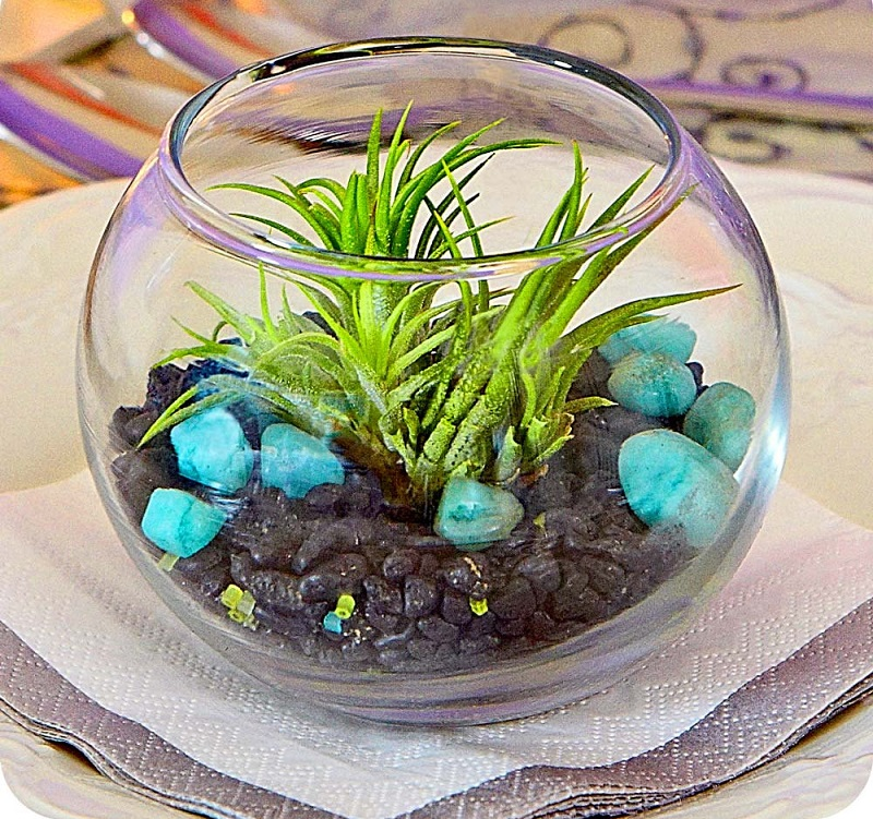 terrariums-decoratifs-23