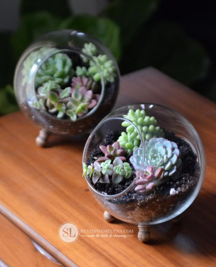 terrariums-decoratifs-3