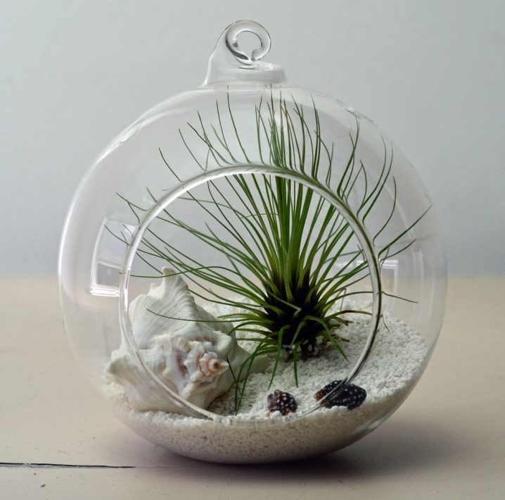 terrariums-decoratifs-5