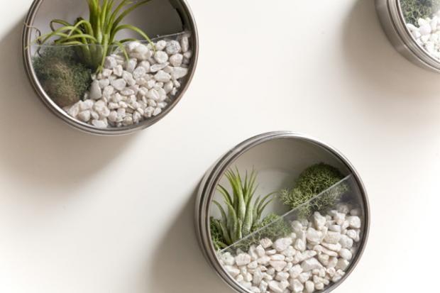 idees-de-terrarium-10