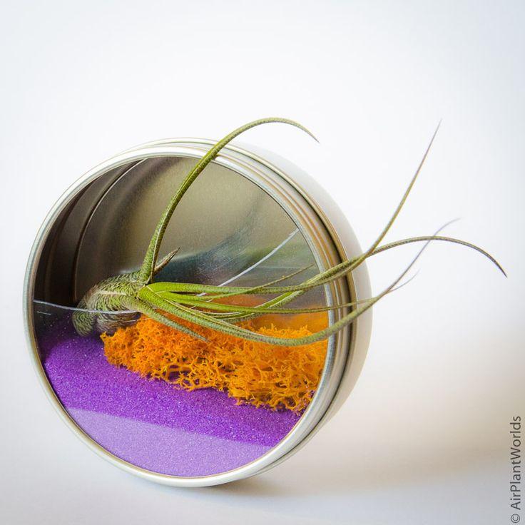 idees-de-terrarium-14