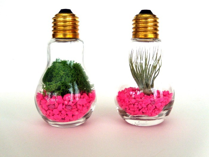 idees-de-terrarium-16