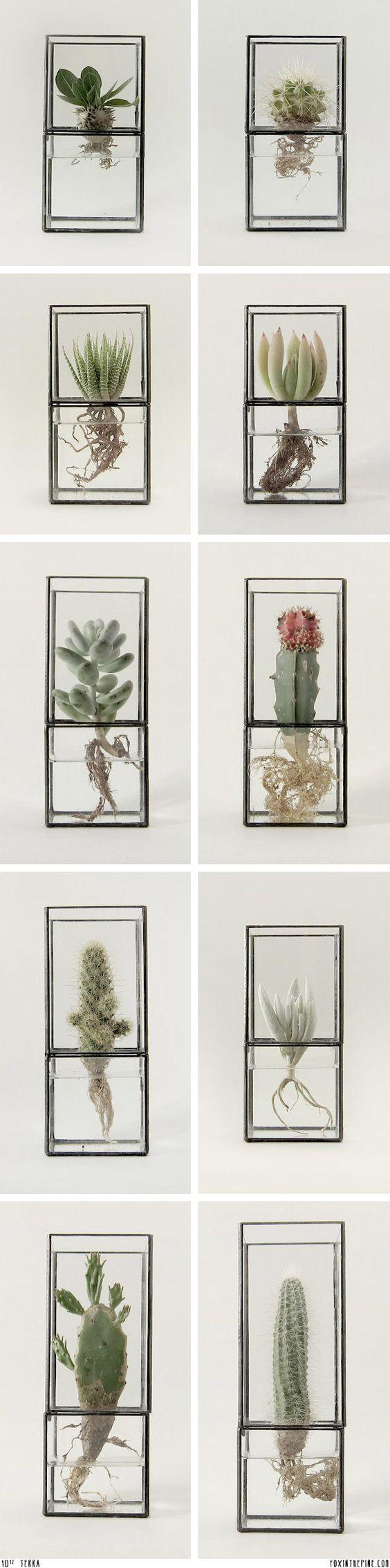 15+ Les Plus Belles Idées de Terrarium Qui Sont Simplement Incroyable  15+ Les Plus Belles Idées de Terrarium Qui Sont Simplement Incroyable  15+ Les Plus Belles Idées de Terrarium Qui Sont Simplement Incroyable