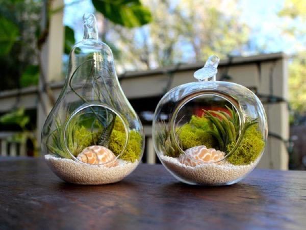 idees-de-terrarium-6
