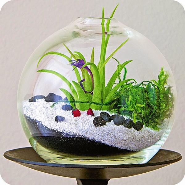 idees-de-terrarium-8
