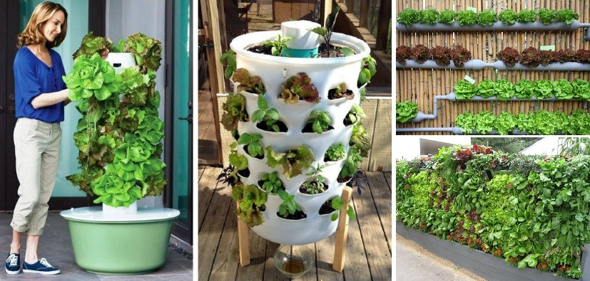 idees-mur-vegetal-jardin-vertical
