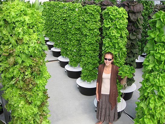 mur-vegetal-jardin-vertical-10