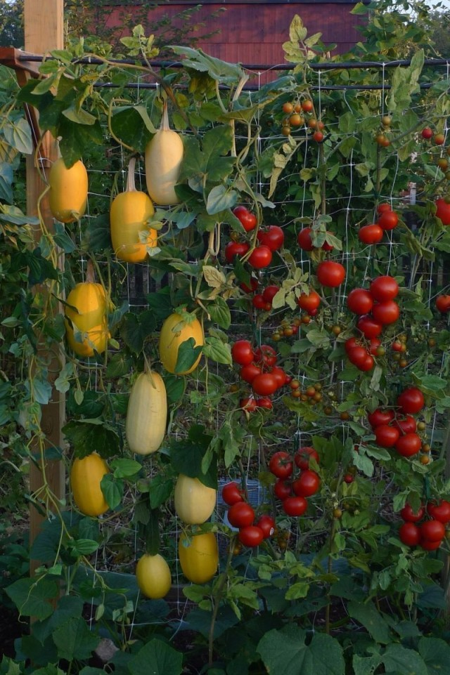mur-vegetal-jardin-vertical-14
