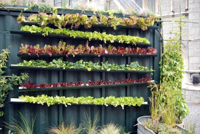 mur-vegetal-jardin-vertical-15