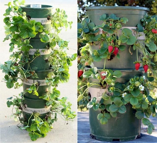 mur-vegetal-jardin-vertical-17