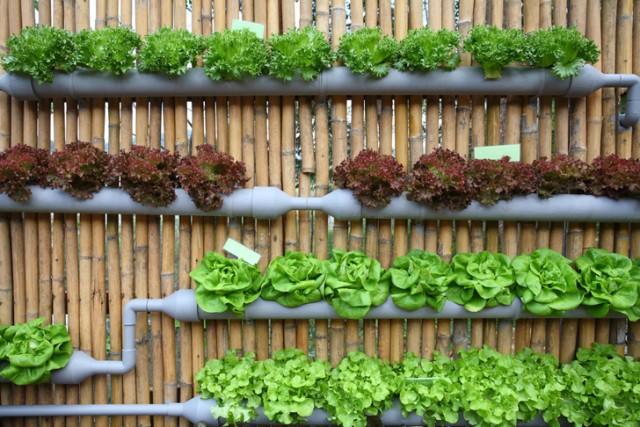 20+ Idées Originales et Astuces pour Mur Jardin Végétal et Vertical  20+ Idées Originales et Astuces pour Mur Jardin Végétal et Vertical