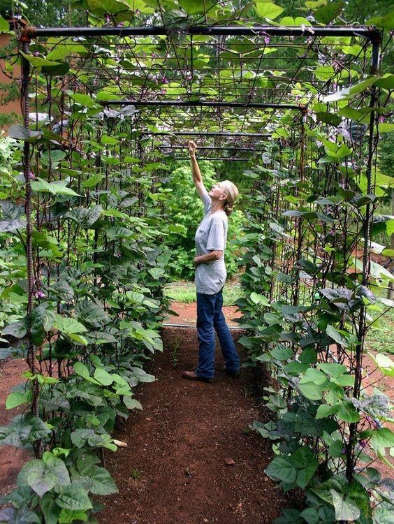 mur-vegetal-jardin-vertical-21