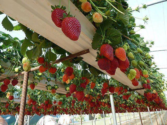 mur-vegetal-jardin-vertical-22