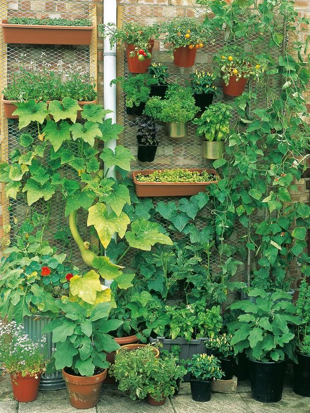 mur-vegetal-jardin-vertical-4