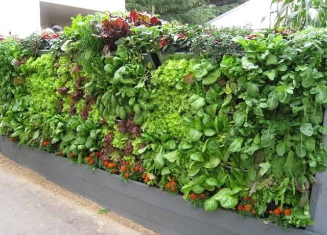 mur-vegetal-jardin-vertical-5