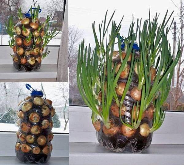 mur-vegetal-jardin-vertical-7