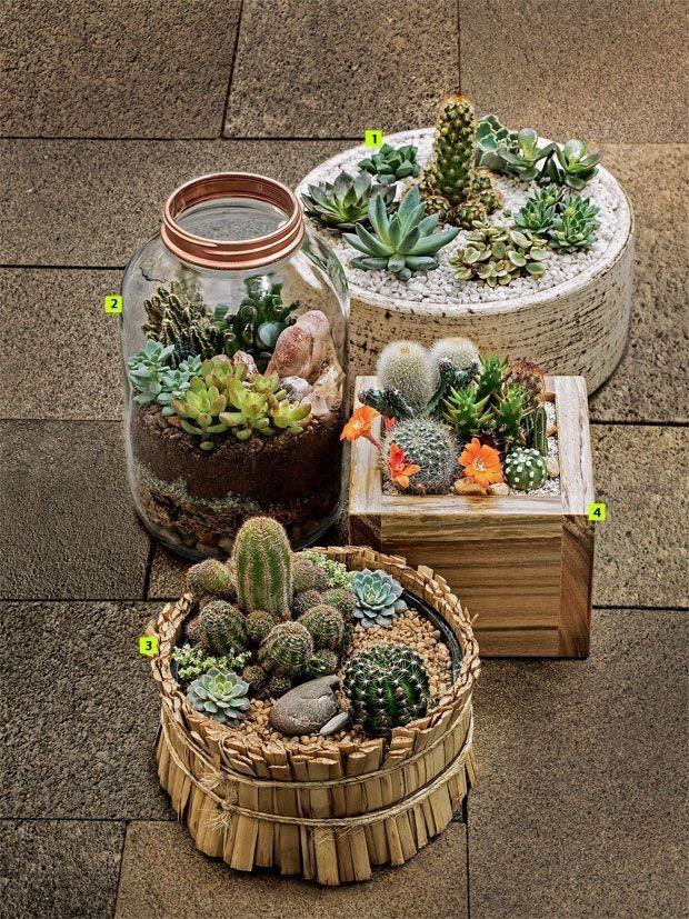 mini-cactus-jardins-1