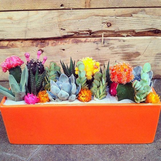 mini-cactus-jardins-10