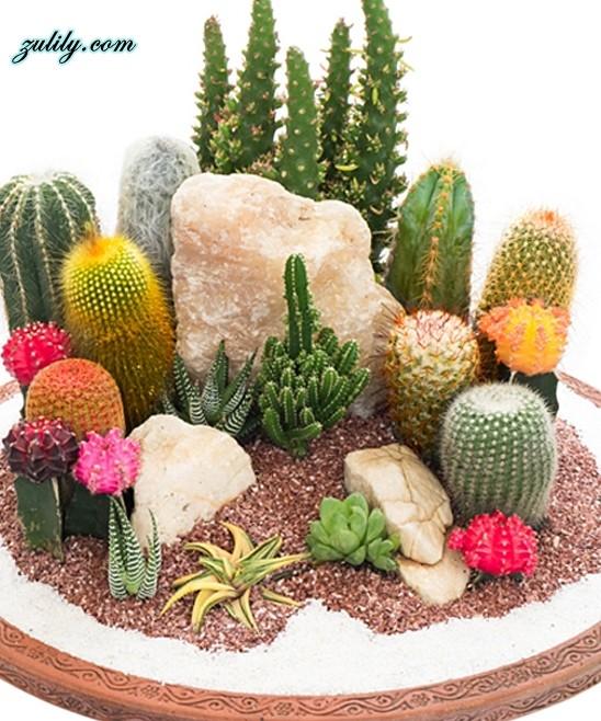 mini-cactus-jardins-11