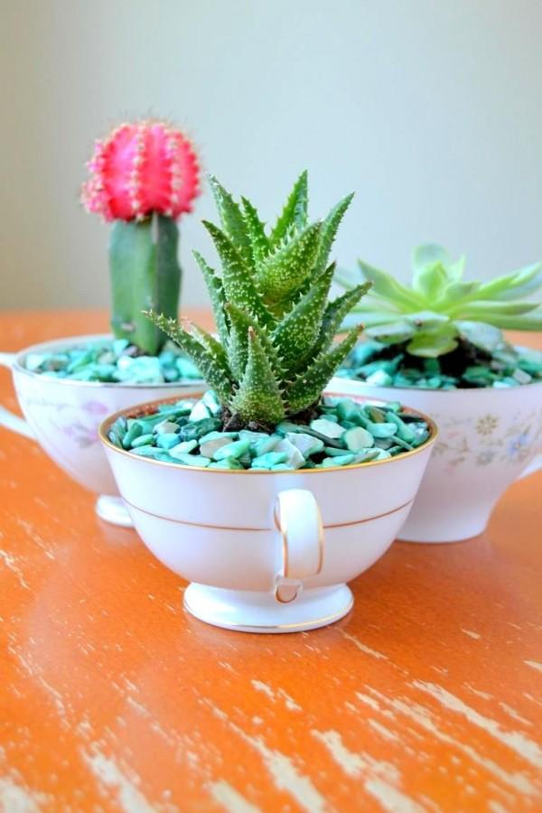 mini-cactus-jardins-12