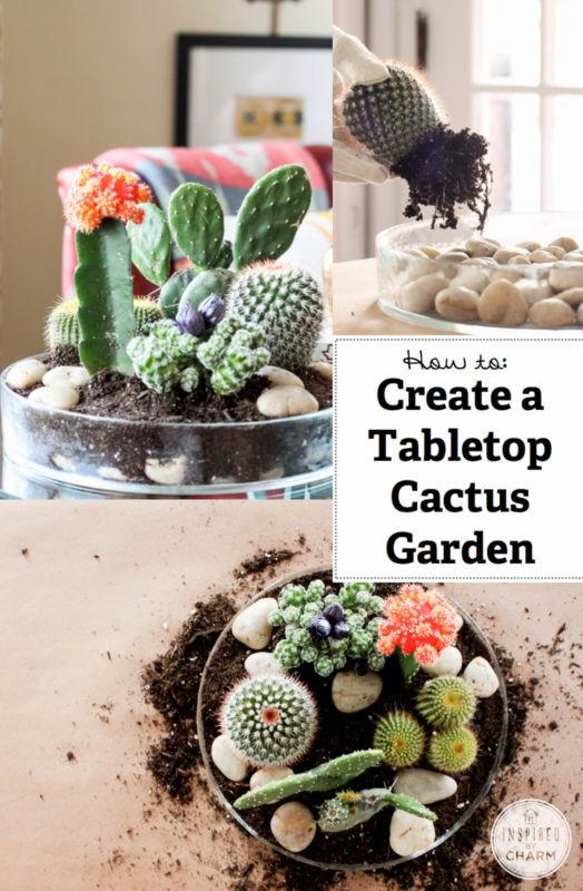 mini-cactus-jardins-13