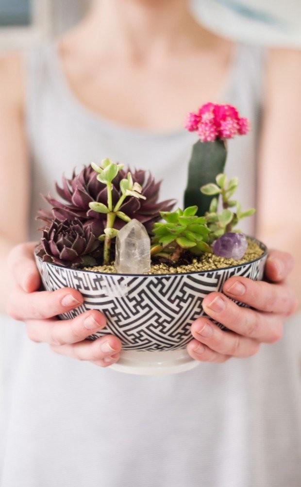 mini-cactus-jardins-14