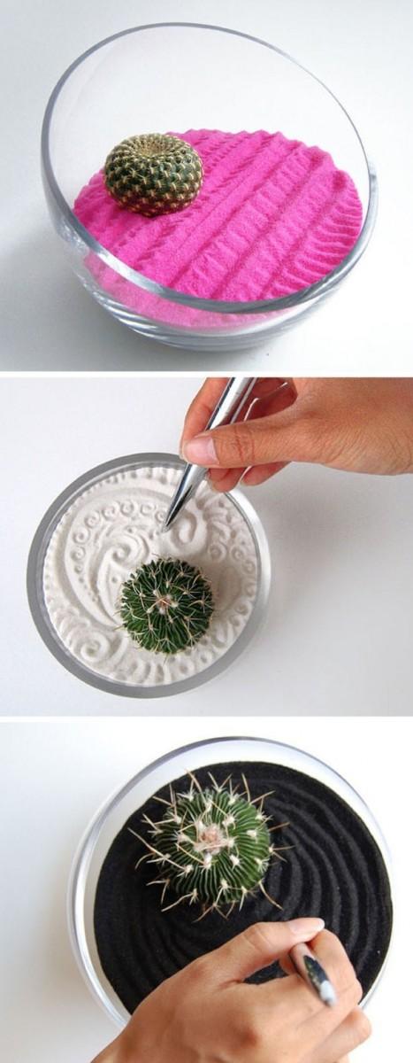 mini-cactus-jardins-17