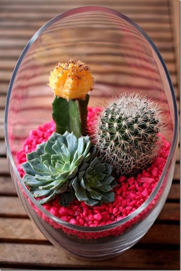 mini-cactus-jardins-18