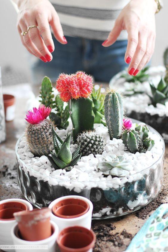 mini-cactus-jardins-19