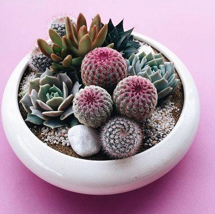 mini-cactus-jardins-3