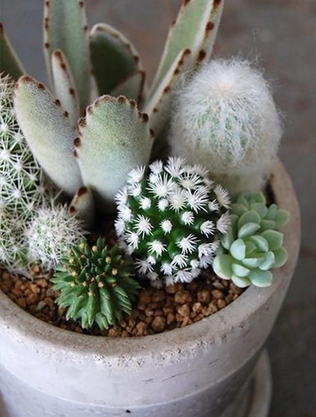 mini-cactus-jardins-4