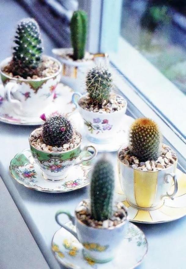 mini-cactus-jardins-5