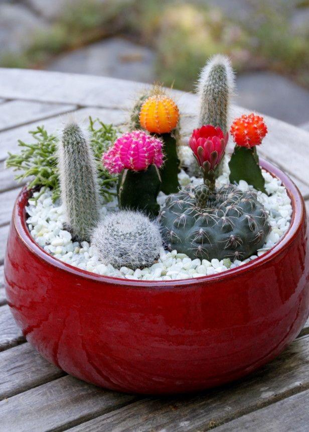 mini-cactus-jardins-8