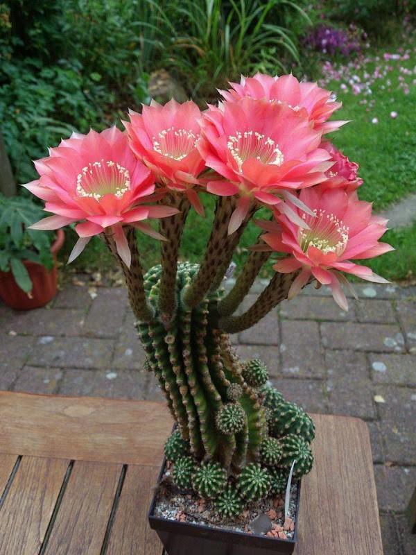 mini-cactus-jardins-9