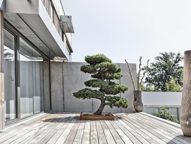 10+ Jardin Japonais Impressionnant Avec Arbre Bonsai