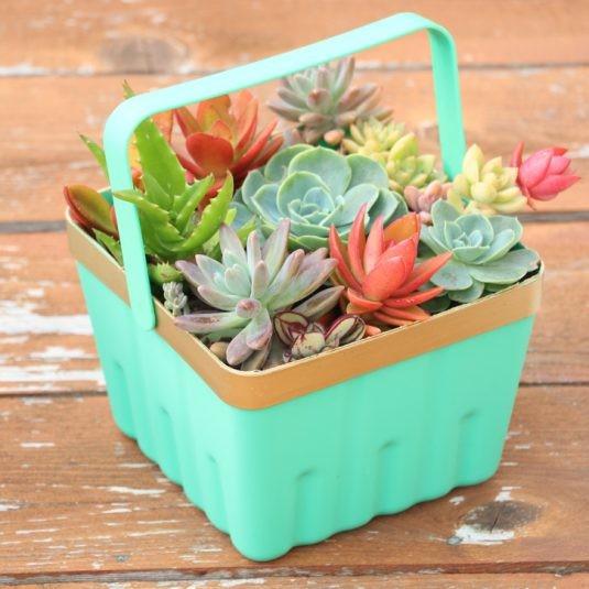 Planteurs-Succulents-1