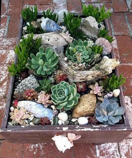 Planteurs-Succulents-10