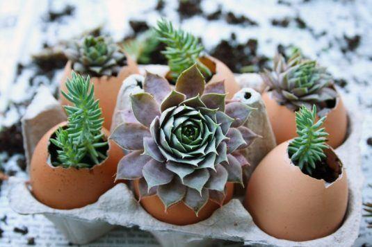 Planteurs-Succulents-11