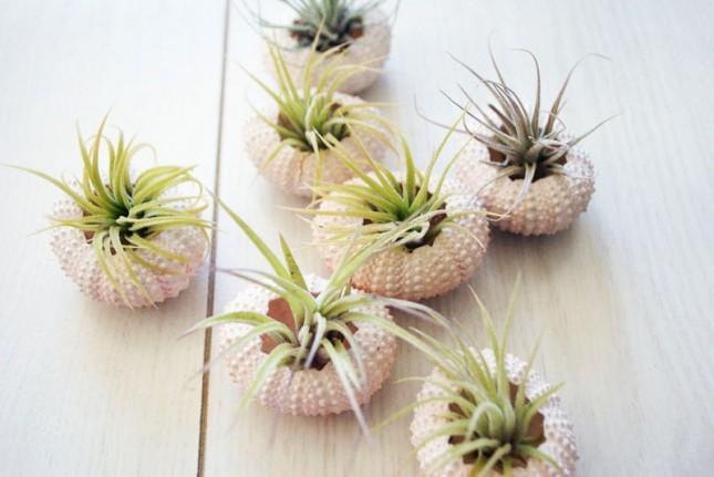 Planteurs-Succulents-13