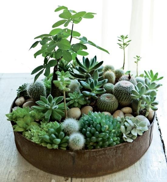 Planteurs-Succulents-16