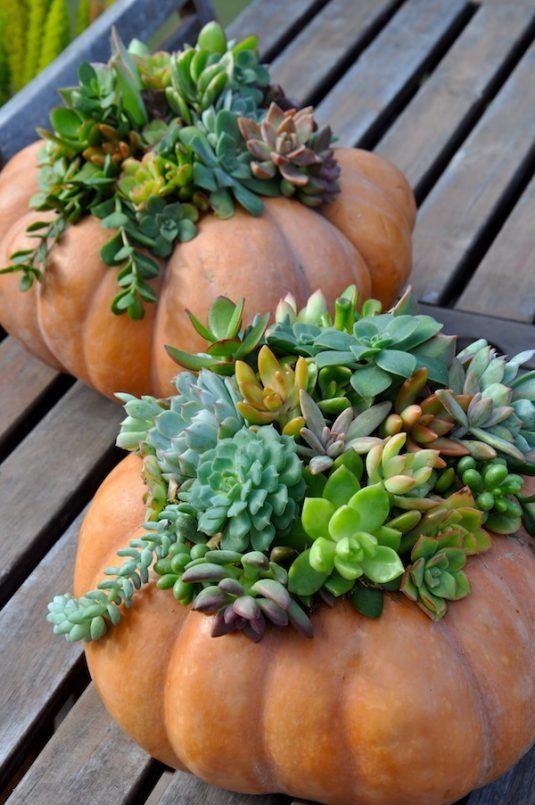 15+ Incroyables Planteurs Succulents  15+ Incroyables Planteurs Succulents  15+ Incroyables Planteurs Succulents