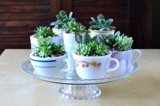 Planteurs-Succulents-8