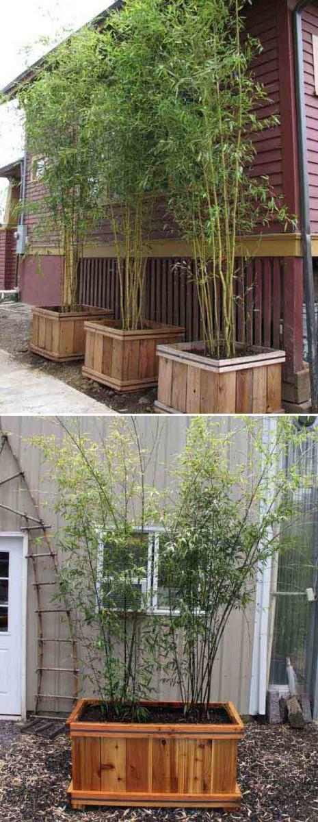 bambou-jardin-15