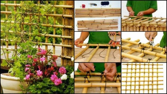 bambou-jardin-6