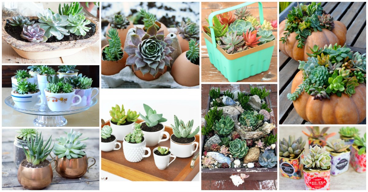 ideas-Planteurs-Succulents