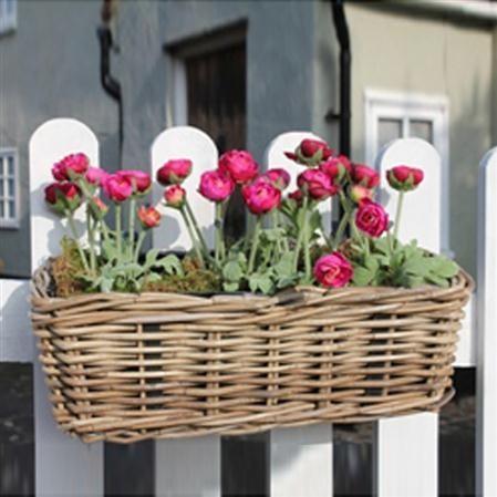 jardiner-sur-ton-balcon-12