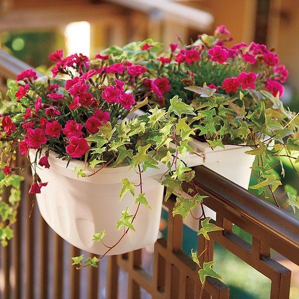 15+ Magnifiques Boîtes de Fleurs de Balcon  15+ Magnifiques Boîtes de Fleurs de Balcon  15+ Magnifiques Boîtes de Fleurs de Balcon  15+ Magnifiques Boîtes de Fleurs de Balcon